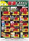 タイヨーのカタログ( あと7日 )